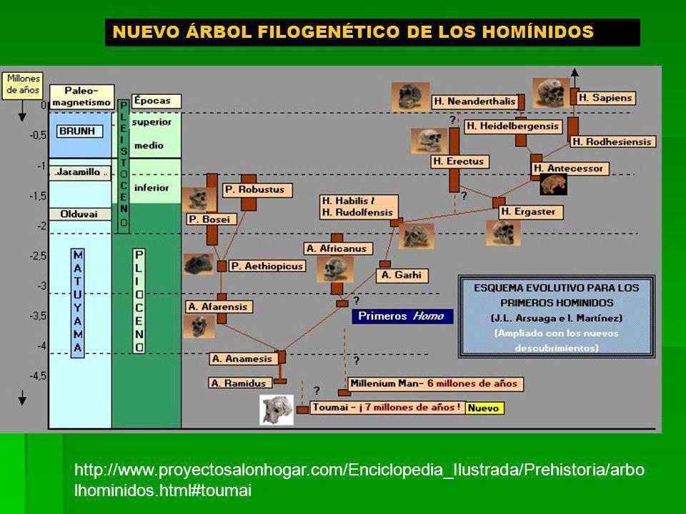 NUEVO ÁRBOL FILOGENÉTICO DE LOS HOMÍNIDOS