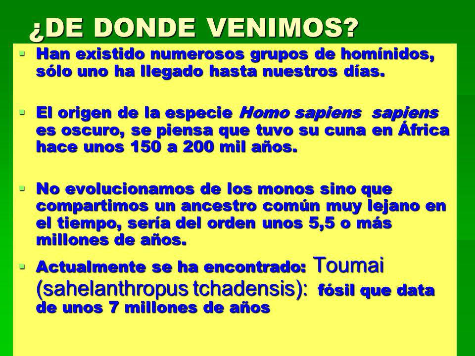 ¿DE DONDE VENIMOS Han existido numerosos grupos de homínidos, sólo uno ha llegado hasta nuestros días.