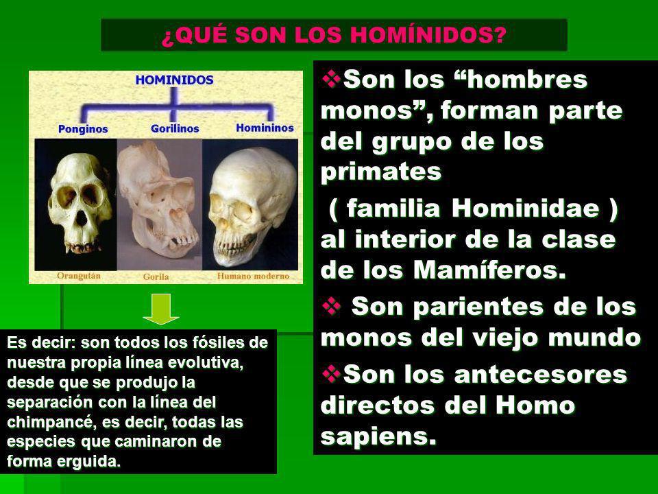 Son los hombres monos , forman parte del grupo de los primates