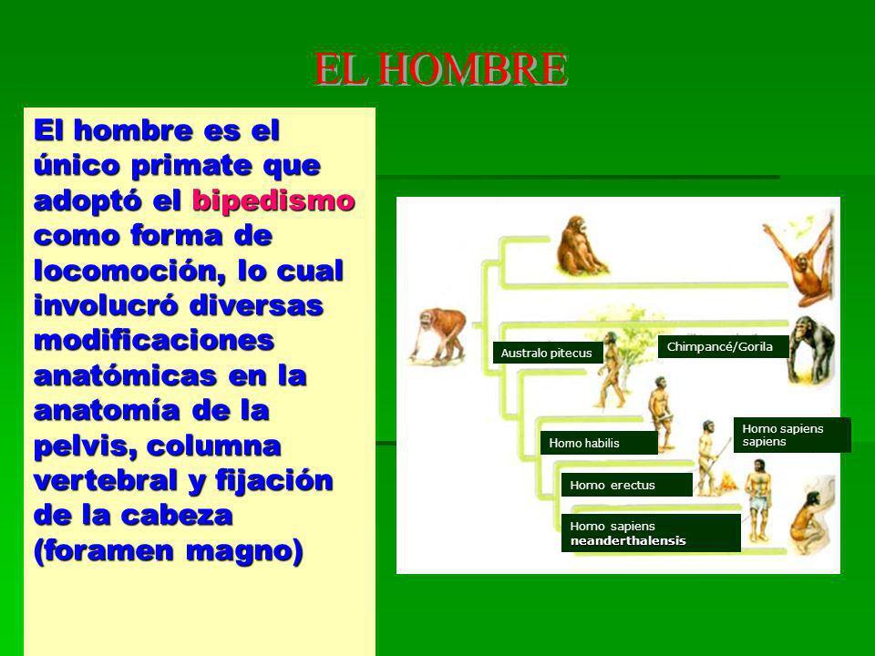 EL HOMBRE