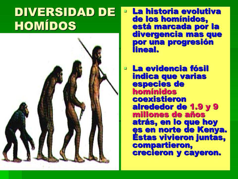 DIVERSIDAD DE HOMÍDOS La historia evolutiva de los homínidos, está marcada por la divergencia mas que por una progresión lineal.
