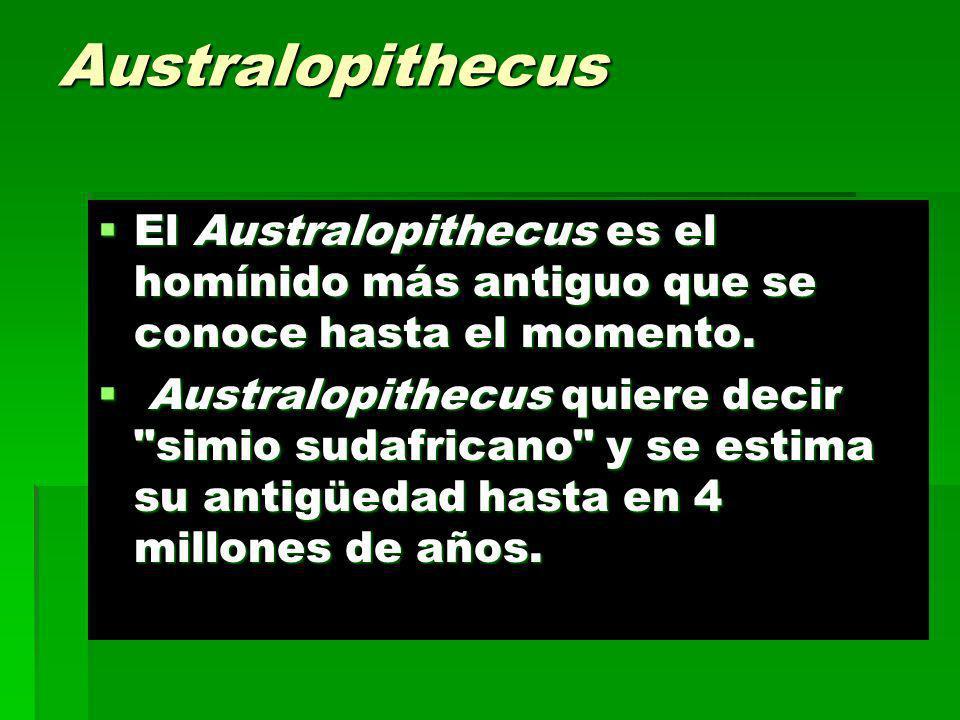 Australopithecus El Australopithecus es el homínido más antiguo que se conoce hasta el momento.