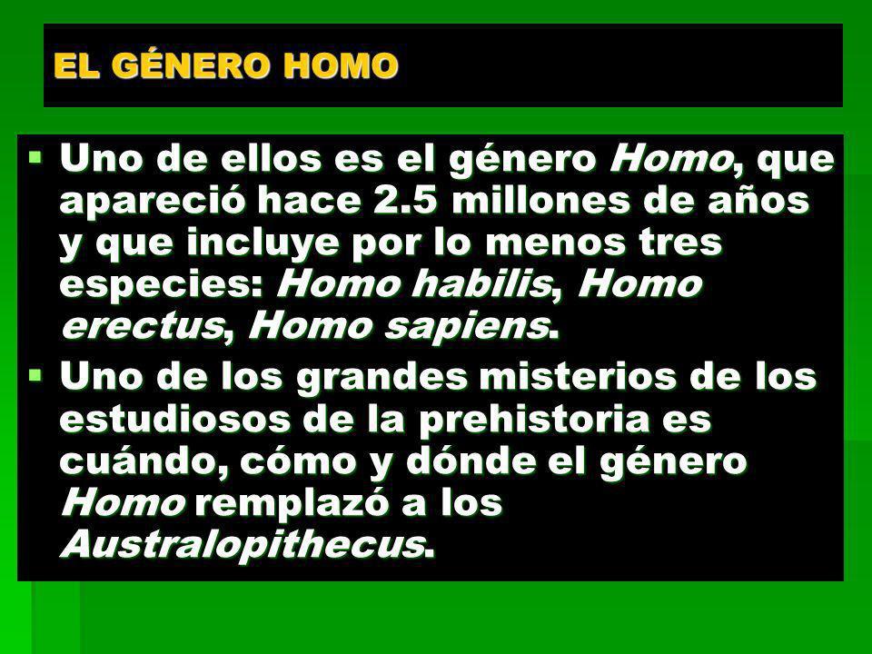 EL GÉNERO HOMO