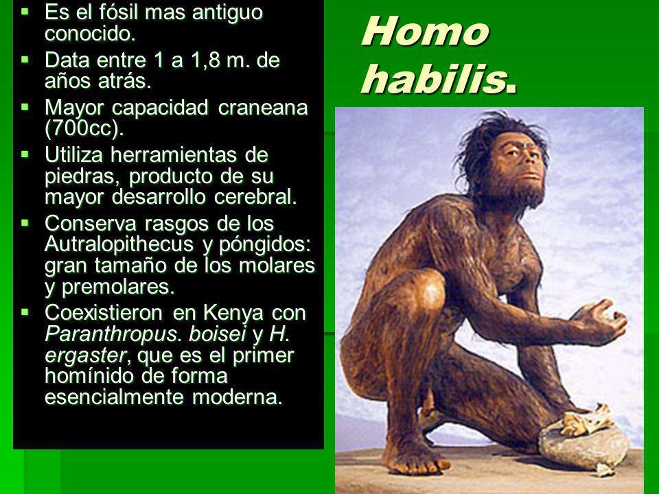 Homo habilis. Es el fósil mas antiguo conocido.