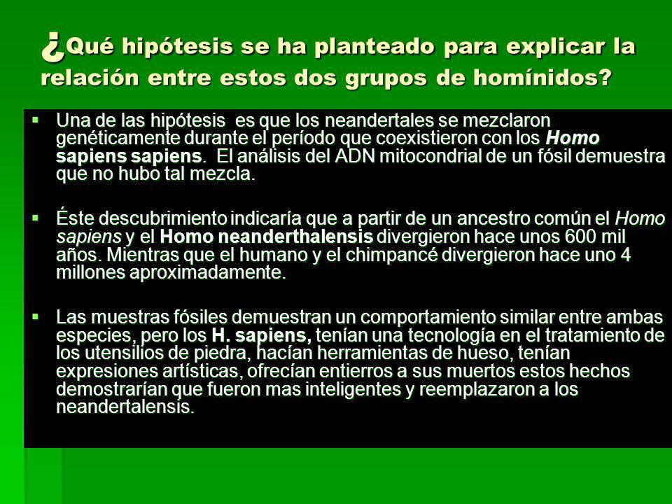 ¿Qué hipótesis se ha planteado para explicar la relación entre estos dos grupos de homínidos