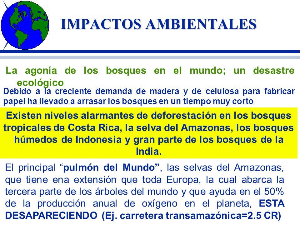 IMPACTOS AMBIENTALESLa agonía de los bosques en el mundo; un desastre ecológico.