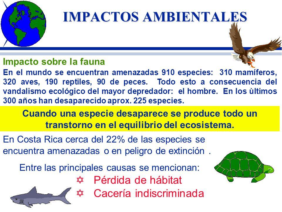IMPACTOS AMBIENTALES Pérdida de hábitat Cacería indiscriminada
