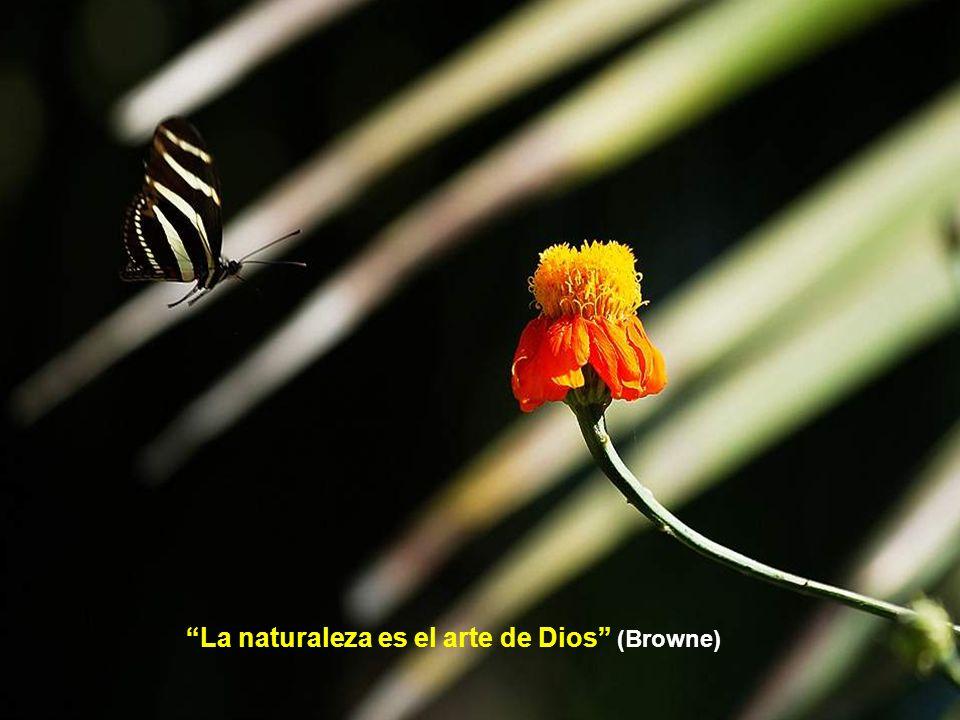 La naturaleza es el arte de Dios (Browne)