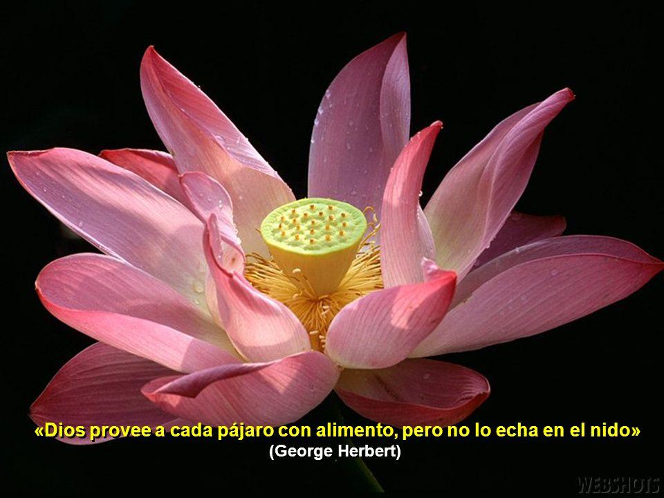 «Dios provee a cada pájaro con alimento, pero no lo echa en el nido» (George Herbert)