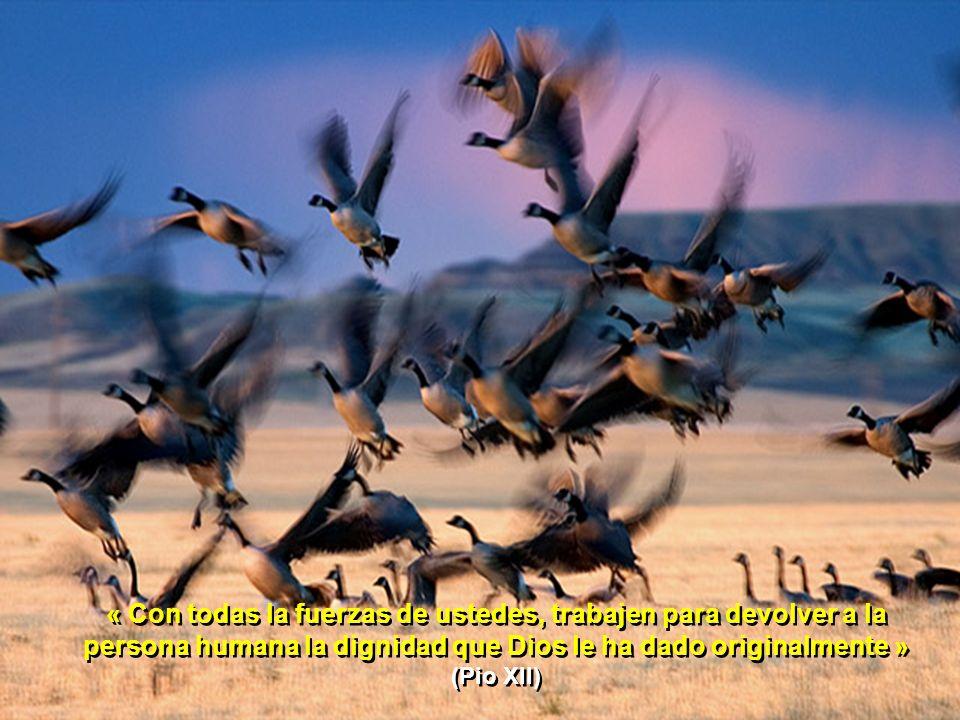 « Con todas la fuerzas de ustedes, trabajen para devolver a la persona humana la dignidad que Dios le ha dado originalmente » (Pio XII)