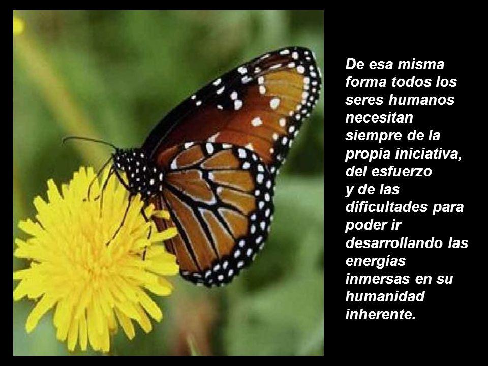 De esa misma forma todos los seres humanos necesitan siempre de la propia iniciativa, del esfuerzo y de las dificultades para poder ir desarrollando las energías inmersas en su humanidad inherente.