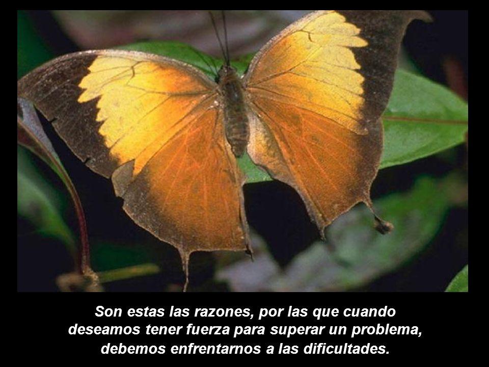 Son estas las razones, por las que cuando deseamos tener fuerza para superar un problema, debemos enfrentarnos a las dificultades.