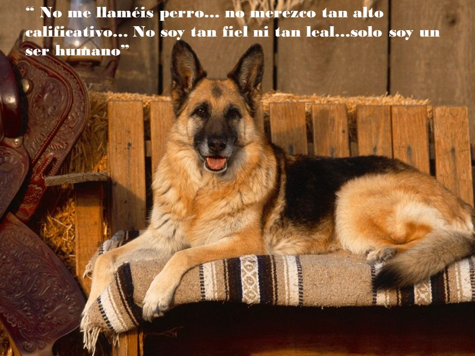 No me llaméis perro… no merezco tan alto calificativo… No soy tan fiel ni tan leal…solo soy un ser humano
