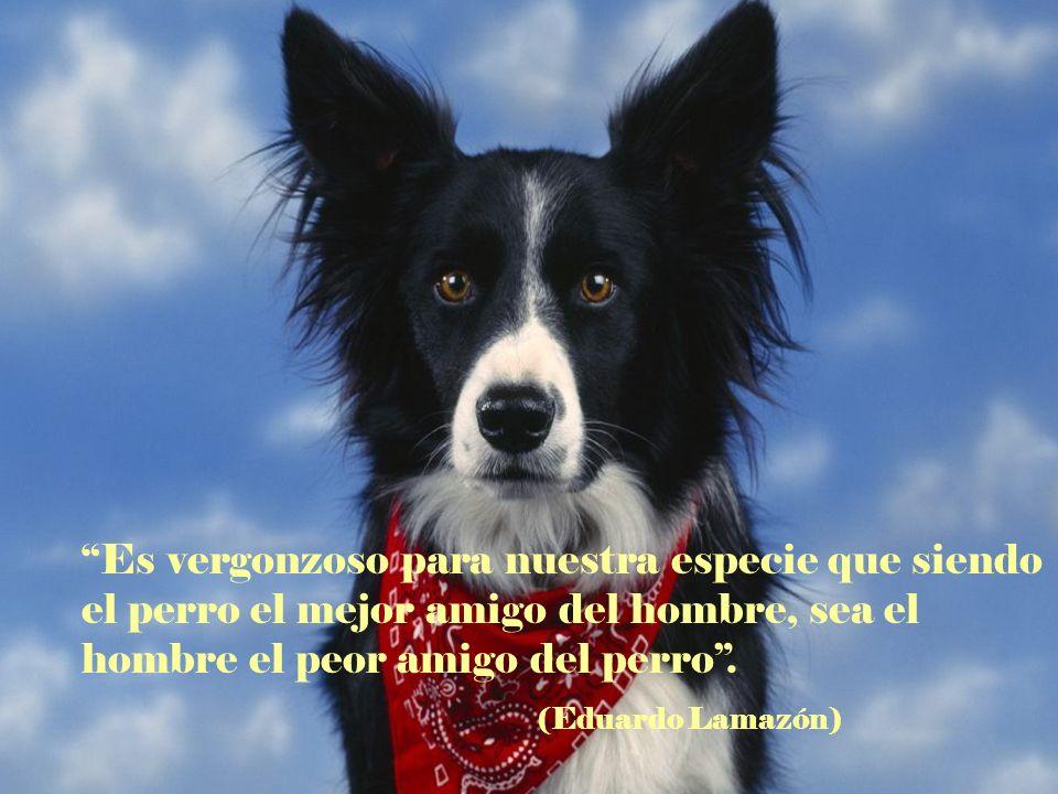 Es vergonzoso para nuestra especie que siendo el perro el mejor amigo del hombre, sea el hombre el peor amigo del perro .
