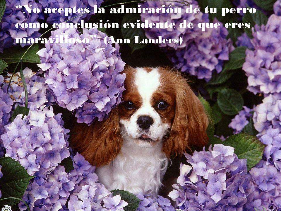No aceptes la admiración de tu perro como conclusión evidente de que eres maravilloso (Ann Landers)