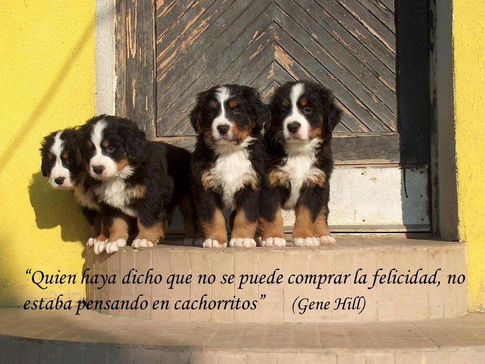 Quien haya dicho que no se puede comprar la felicidad, no estaba pensando en cachorritos (Gene Hill)