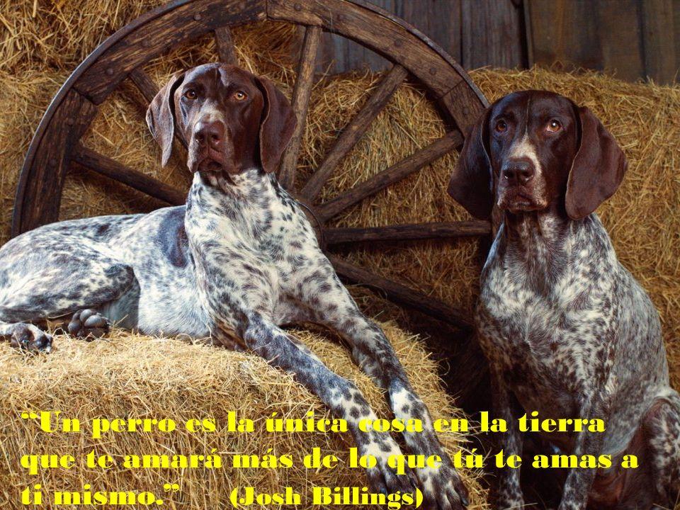 Un perro es la única cosa en la tierra que te amará más de lo que tú te amas a ti mismo. (Josh Billings)