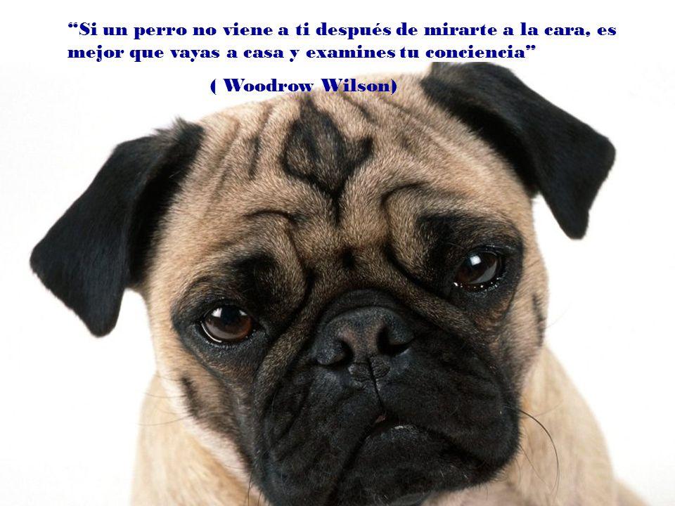 Si un perro no viene a ti después de mirarte a la cara, es mejor que vayas a casa y examines tu conciencia