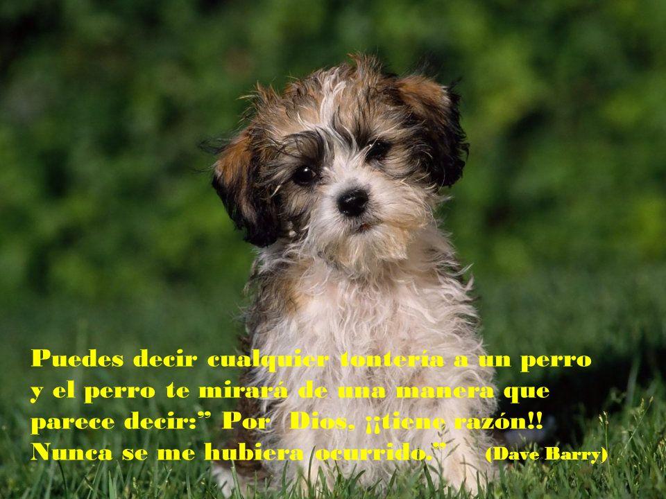 Puedes decir cualquier tontería a un perro y el perro te mirará de una manera que parece decir: Por Dios, ¡¡tiene razón!.