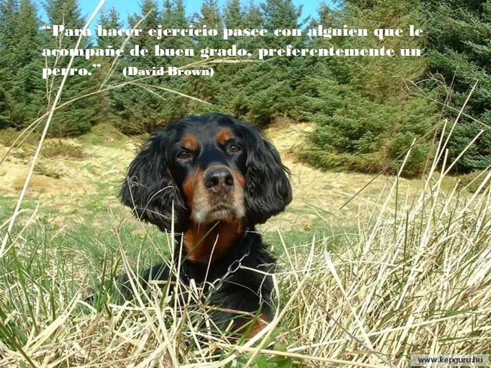 Para hacer ejercicio pasee con alguien que le acompañe de buen grado, preferentemente un perro. (David Brown)