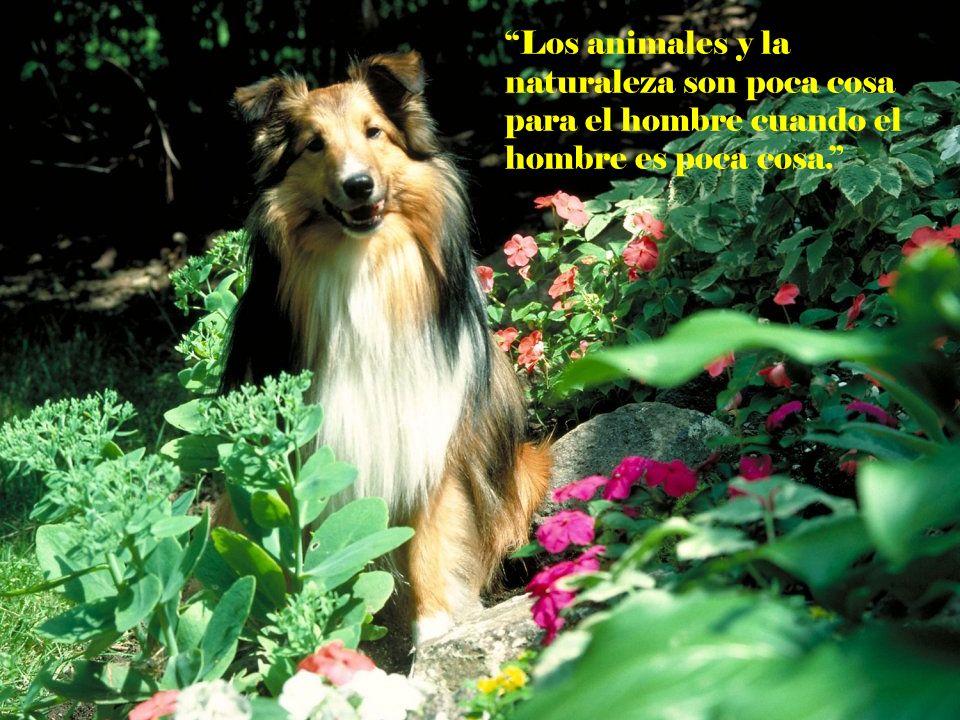 Los animales y la naturaleza son poca cosa para el hombre cuando el hombre es poca cosa.