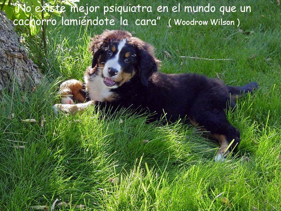 No existe mejor psiquiatra en el mundo que un cachorro lamiéndote la cara ( Woodrow Wilson )