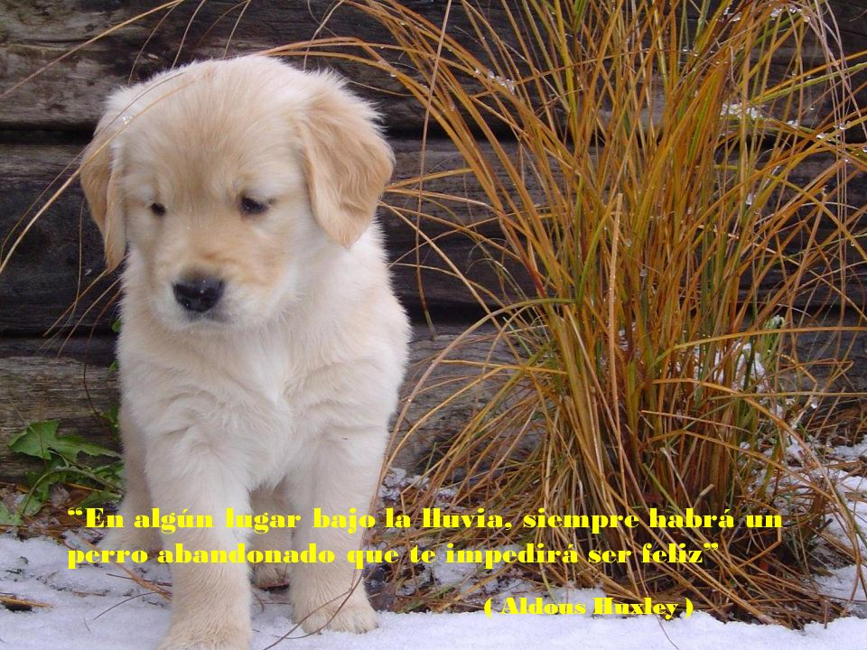 En algún lugar bajo la lluvia, siempre habrá un perro abandonado que te impedirá ser feliz