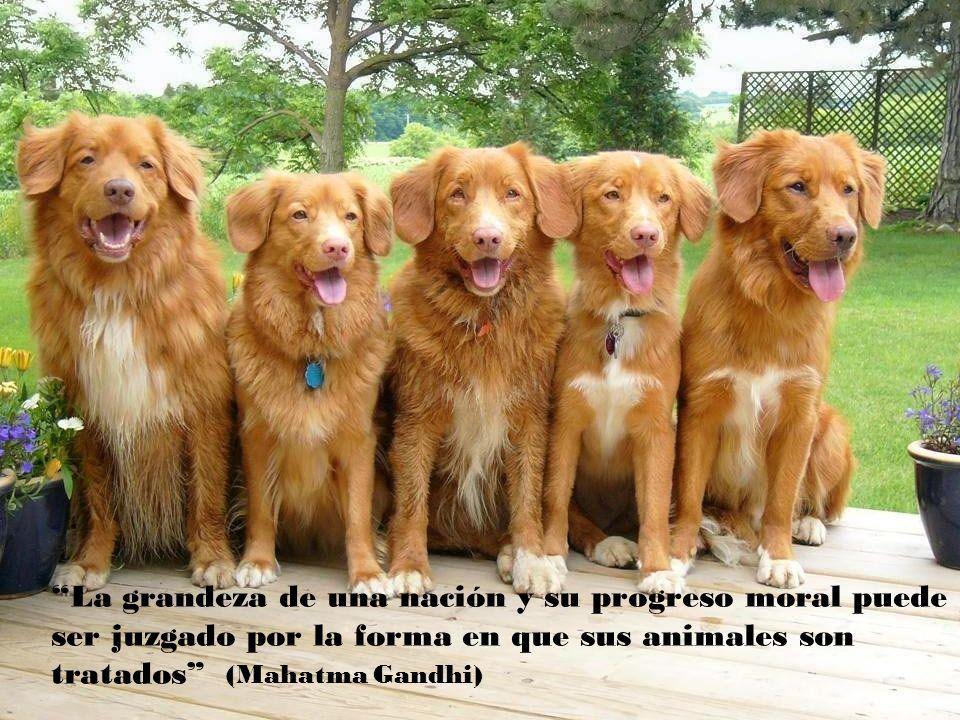La grandeza de una nación y su progreso moral puede ser juzgado por la forma en que sus animales son tratados (Mahatma Gandhi)