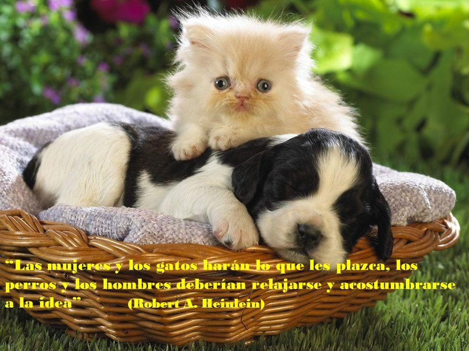 Las mujeres y los gatos harán lo que les plazca, los perros y los hombres deberían relajarse y acostumbrarse a la idea (Robert A.
