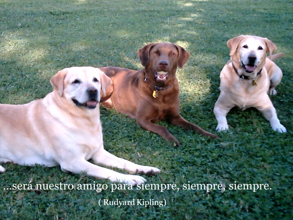 …será nuestro amigo para siempre, siempre, siempre.