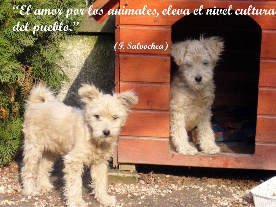 El amor por los animales, eleva el nivel cultural del pueblo.