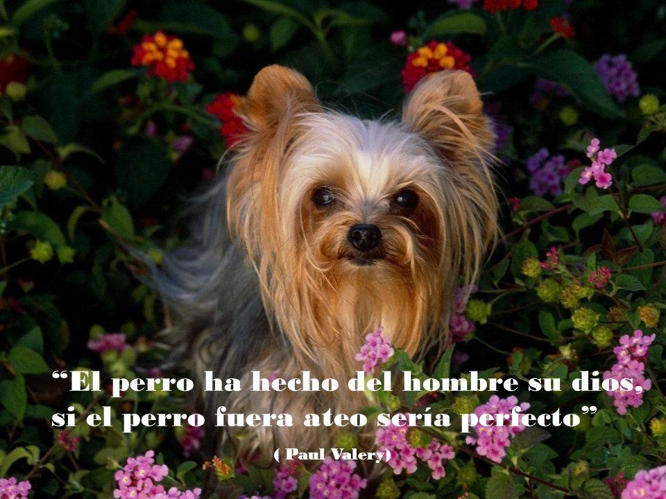 El perro ha hecho del hombre su dios, si el perro fuera ateo sería perfecto