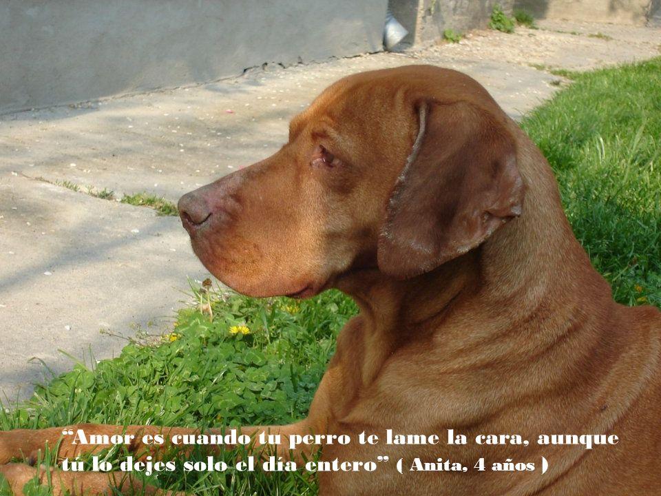 Amor es cuando tu perro te lame la cara, aunque tú lo dejes solo el día entero ( Anita, 4 años )