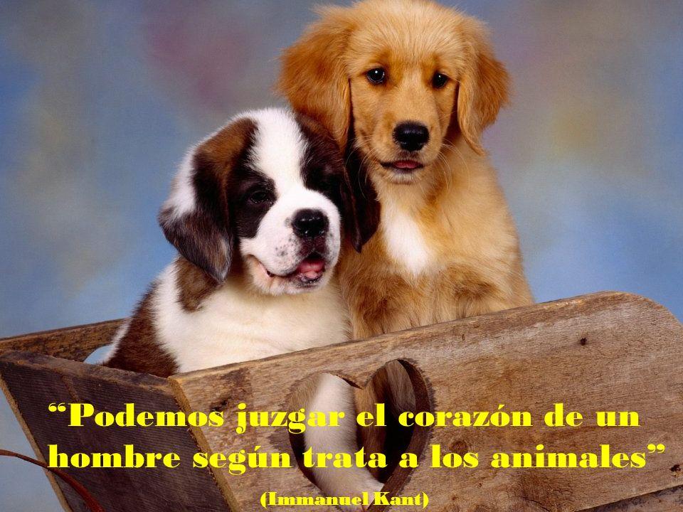 Podemos juzgar el corazón de un hombre según trata a los animales