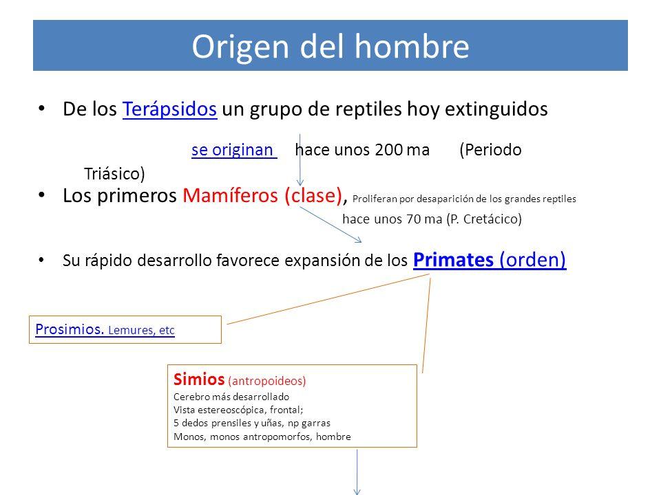 Origen del hombre se originan hace unos 200 ma (Periodo Triásico)