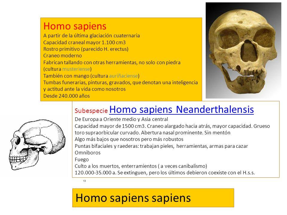 Homo sapiens sapiens Homo sapiens