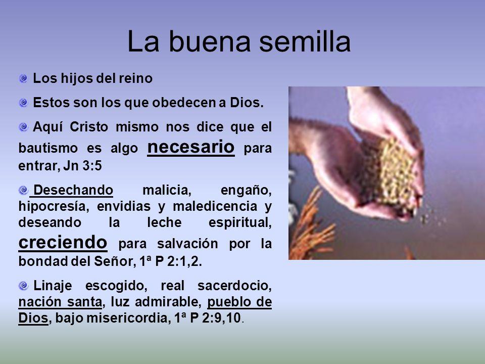 La buena semilla Los hijos del reino