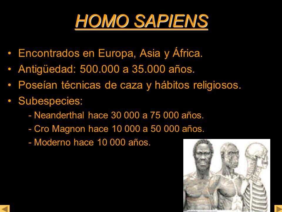 HOMO SAPIENS Encontrados en Europa, Asia y África.