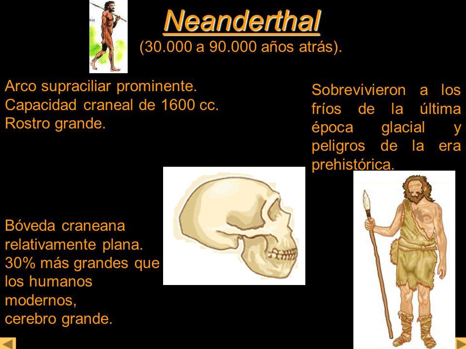 Neanderthal (30.000 a 90.000 años atrás).
