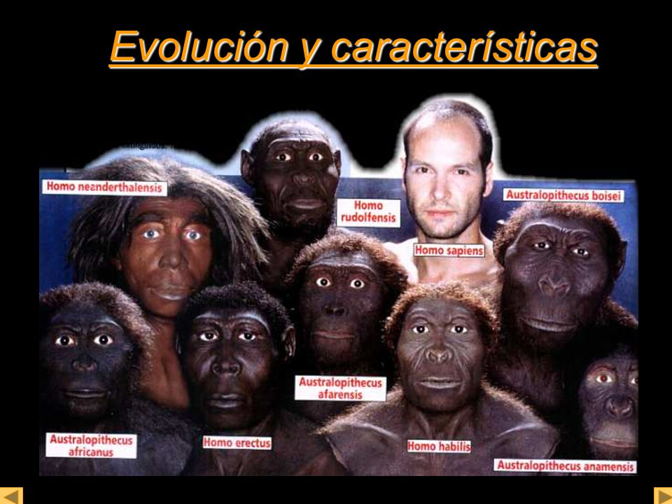 Evolución y características