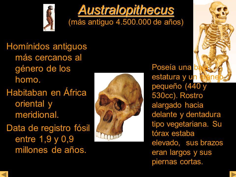 Australopithecus (más antiguo 4.500.000 de años)
