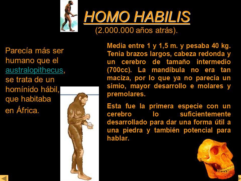 HOMO HABILIS (2.000.000 años atrás).