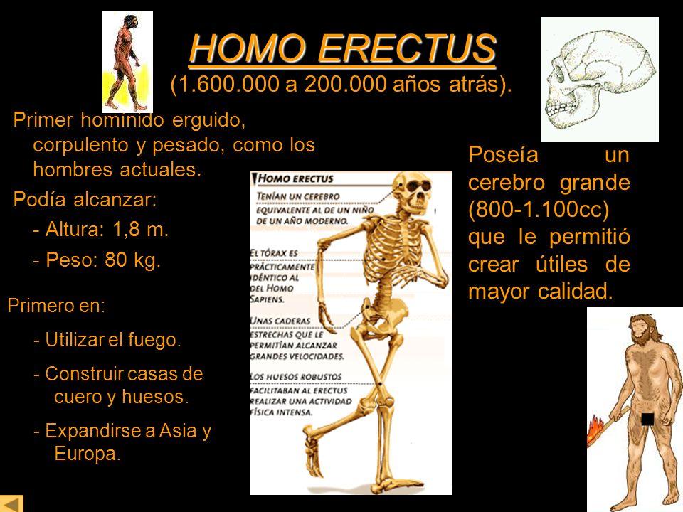 HOMO ERECTUS (1.600.000 a 200.000 años atrás).