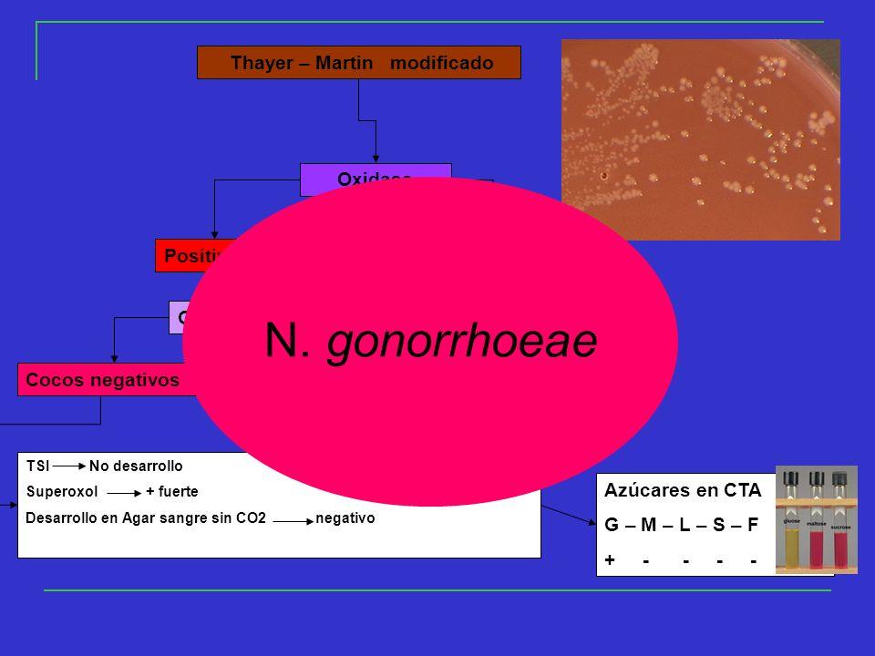 N. gonorrhoeae Oxidasa Positivo Negativo Gram Cocos negativos
