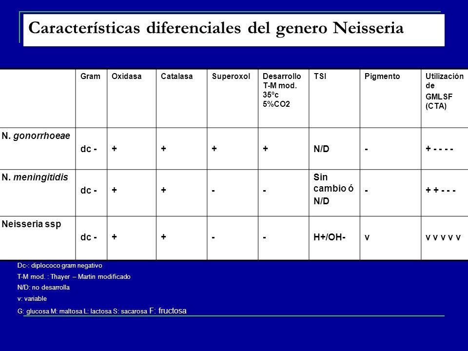 Características diferenciales del genero Neisseria