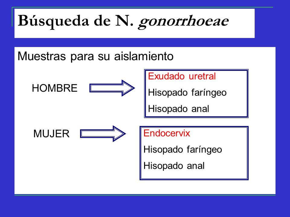 Búsqueda de N. gonorrhoeae