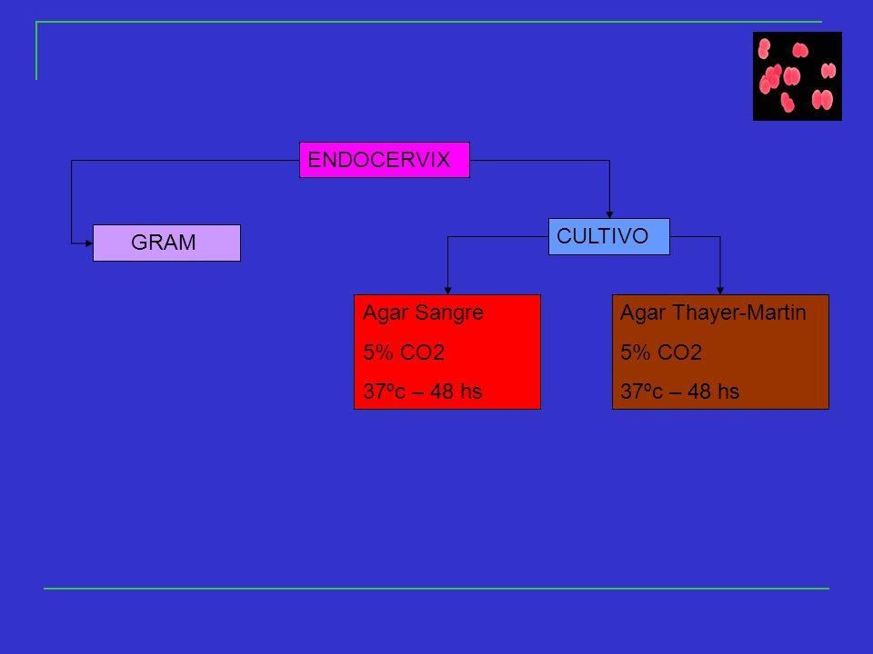 ENDOCERVIX GRAM CULTIVO Agar Sangre 5% CO2 37ºc – 48 hs Agar Thayer-Martin