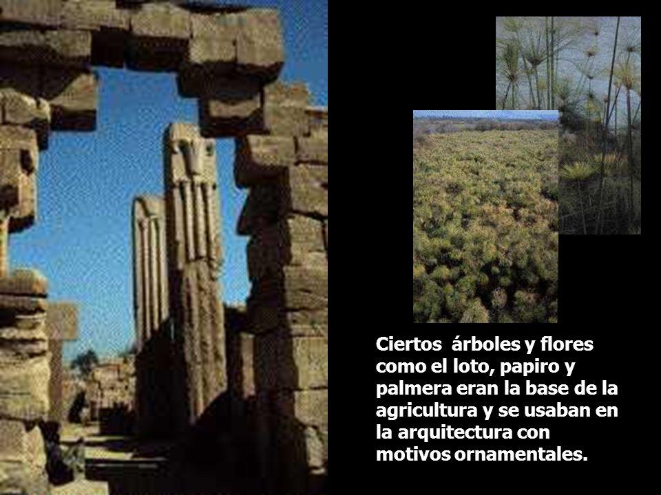 Ciertos árboles y flores como el loto, papiro y palmera eran la base de la agricultura y se usaban en la arquitectura con motivos ornamentales.