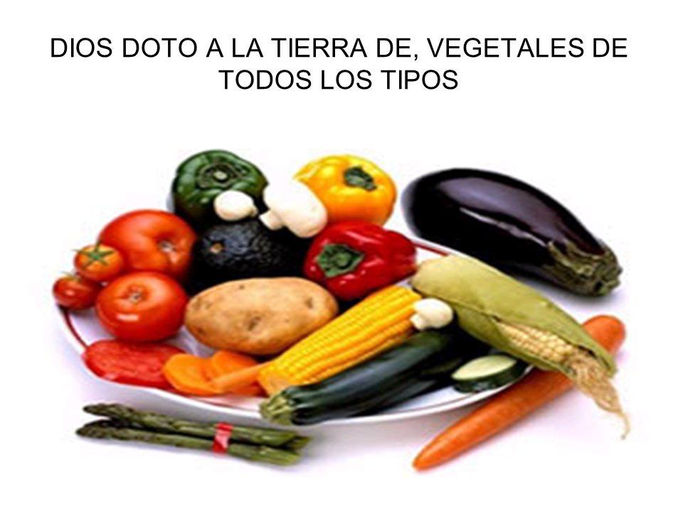 DIOS DOTO A LA TIERRA DE, VEGETALES DE TODOS LOS TIPOS