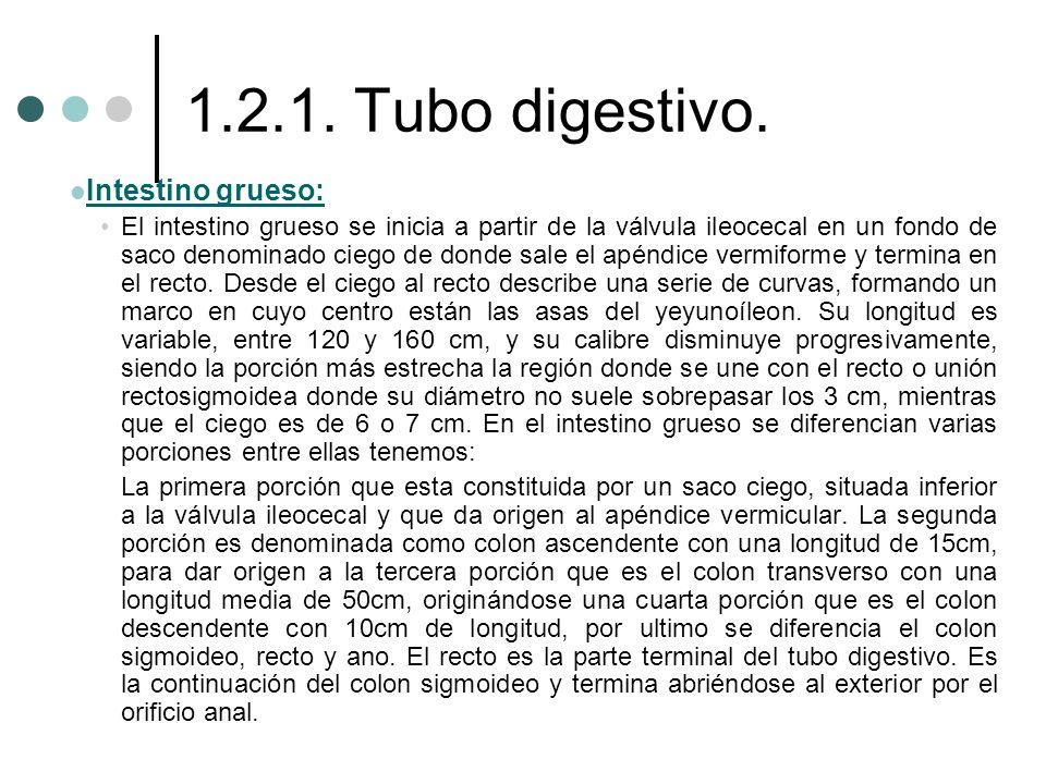 1.2.1. Tubo digestivo. Intestino grueso: